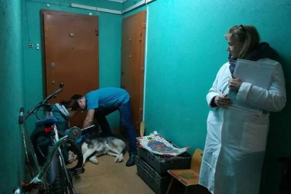 Специалисты осмотрели и привили всех животных в доме