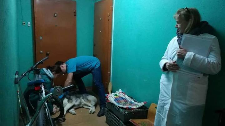 Проверили целый дом: в Ярославле домашняя собака заболела бешенством