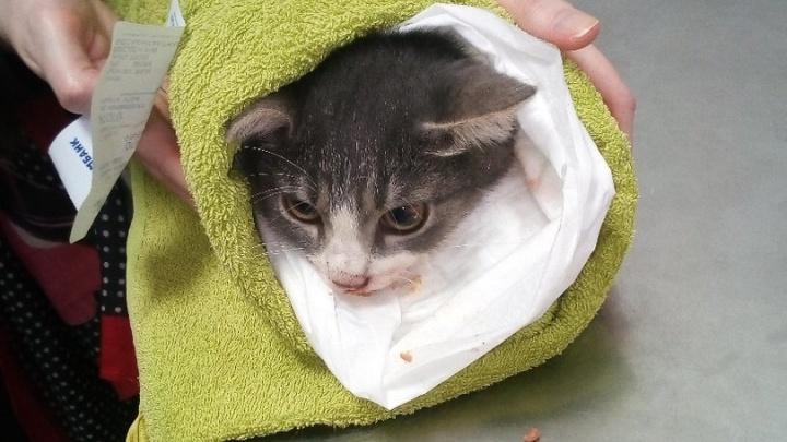 «Я думала, таких людей нет»: на Уралмаше случайные прохожие спасли котенка, рухнувшего с дерева