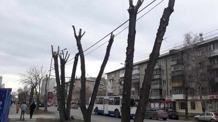 Ещё 500 деревьев в Екатеринбурге пойдут под нож