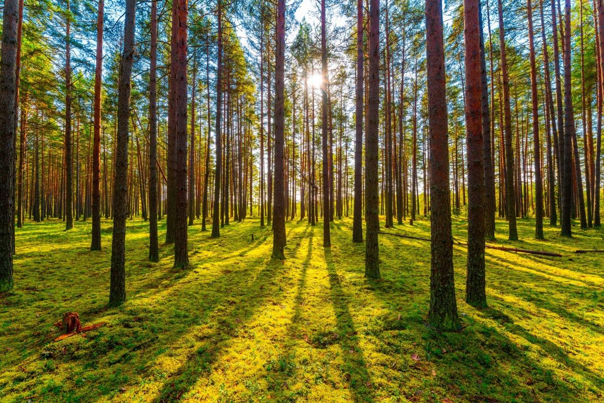 В Сысерстком районе начались продажи земельных участков в окружении леса