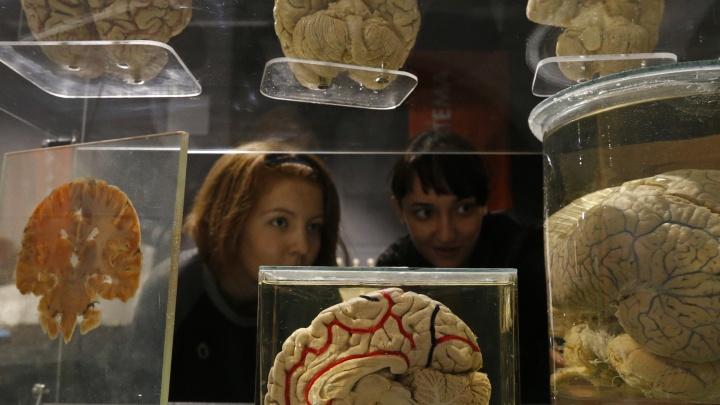 «Это прекрасная мышца, которую можно накачать»: научный журналист — о том, как промыть мозг