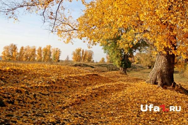 Осень - самое красивое время года. Только холодное