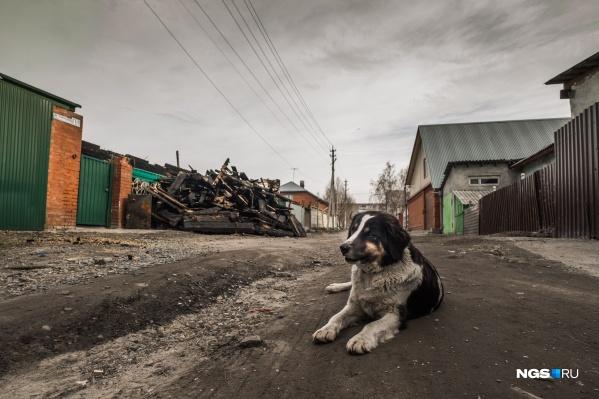 Разобрать сгоревший дом семье Марьясовых помогли добровольцы