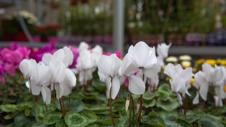 «День тюменского садовода»: закрываем дачный сезон вместе с «Плодовым»