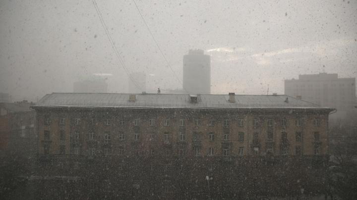 По Новосибирску прошлась внезапная апрельская метель