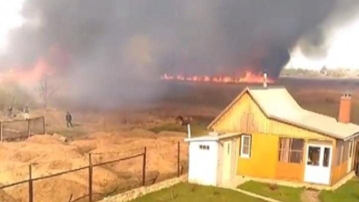 «Жаль животных, которые погибли»: жители Урюпинска сняли на видео страшный пожар на болотах