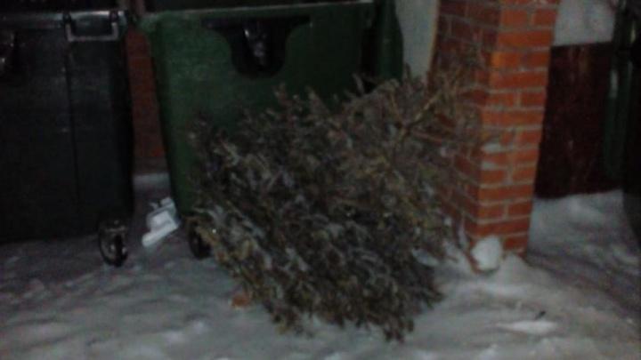 Праздник кончился: новосибирцы начали выбрасывать ёлки