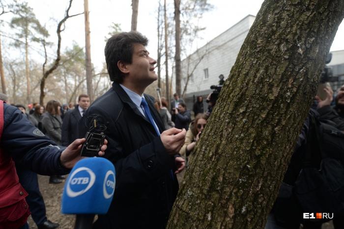 Мэр пообещал, что здоровые деревья рубить не станут