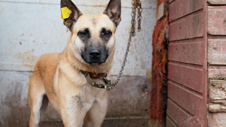 Срок содержания собак в пермском муниципальном приюте увеличат на четыре месяца