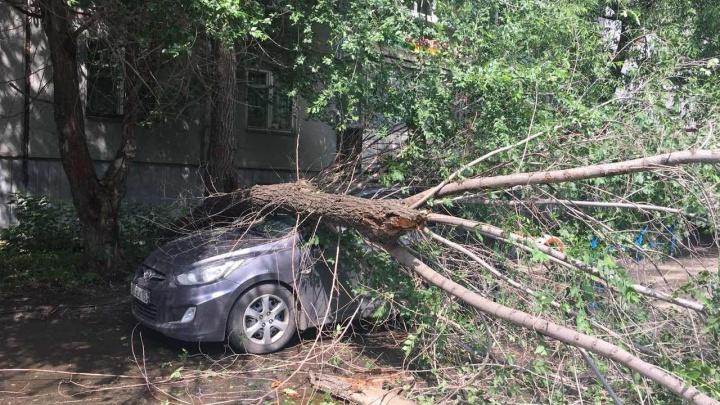 «Должны были спилить»: на иномарку в Челябинске во время дождя рухнуло дерево
