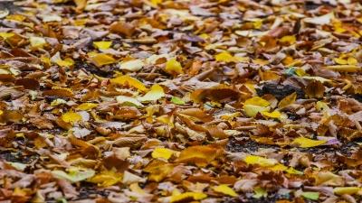 Листьев вам в ленту: прощальная фотосессия волгоградской осени