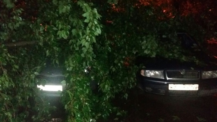 Последствия штормового ветра в Уфе: деревья покорежили десятки автомобилей