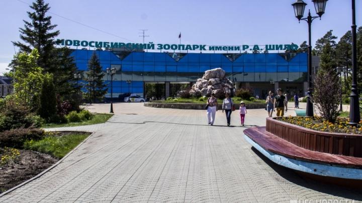 Новосибирский зоопарк попал в тройку самых популярных в стране