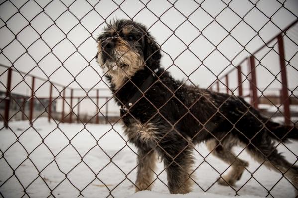 В НЦПДЖ не подтвердили информацию об эвтаназии собак перед каникулами