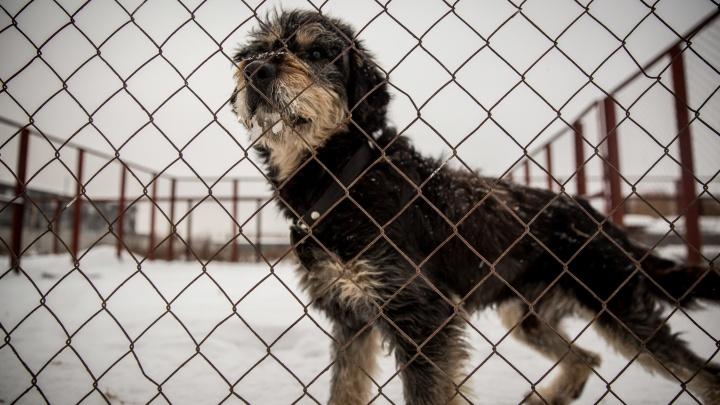 Новосибирцы начали забирать бездомных собак после слухов о массовом усыплении псов перед Новым годом