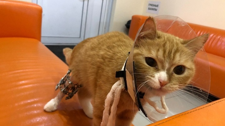 Хозяева попросили усыпить кошку со сломанной лапой. Ветеринары отказались и вылечили ее