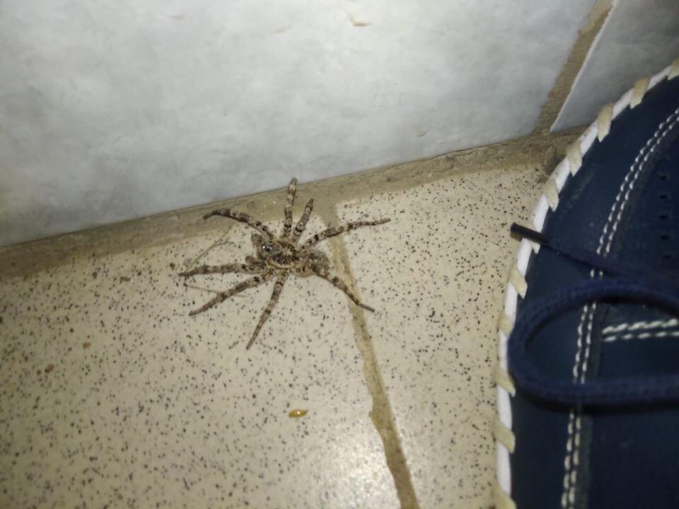 Женщина встретилась с пауком в своем гараже
