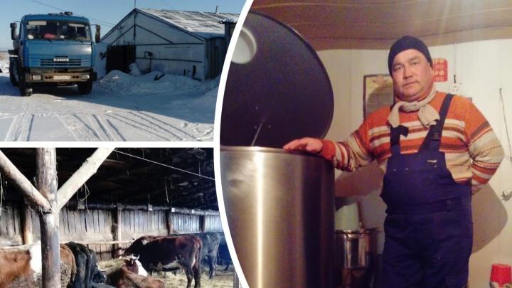 Останемся без мяса? Фермерам в Тюменской области негде забивать скот