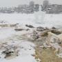 «Купели разломаны, везде мусор»: пермский Чистомэн прибрался на Мотовилихинском пруду после Крещения