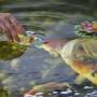 Едят котлеты и светятся в темноте: гуляем по челябинскому Дому-аквариуму и кормим рыб с руки