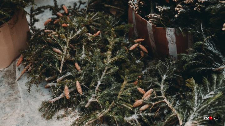 Миллион за дерево: тюменке грозит крупный штраф за срубленную у соседнего дома пихту к Новому году