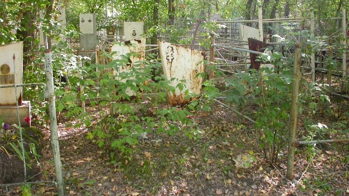 Прокуратура потребовала возбудить уголовное дело о вырубке 55 деревьев на челябинском кладбище