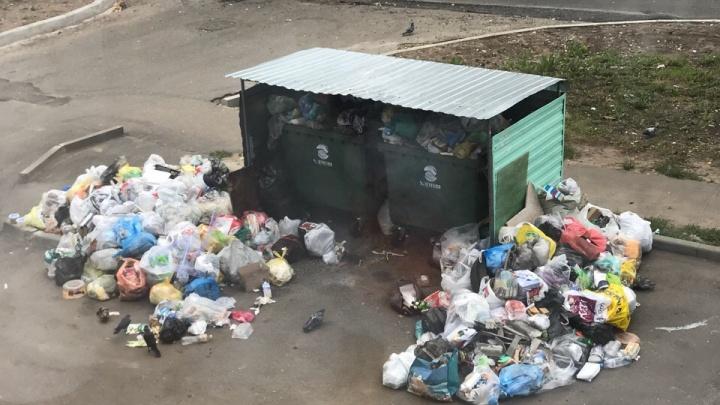 Мусорные войны: кто саботировал вывоз отходов из ярославских дворов