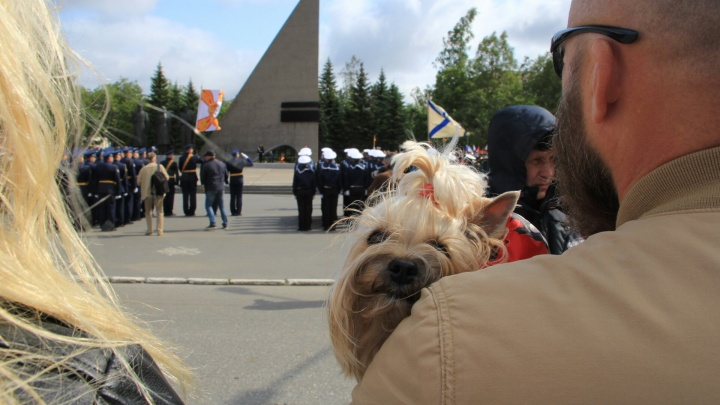 Ветер на пару с дождем, военные оркестры и зрители на гироскутерах: Архангельск отметил День ВМФ