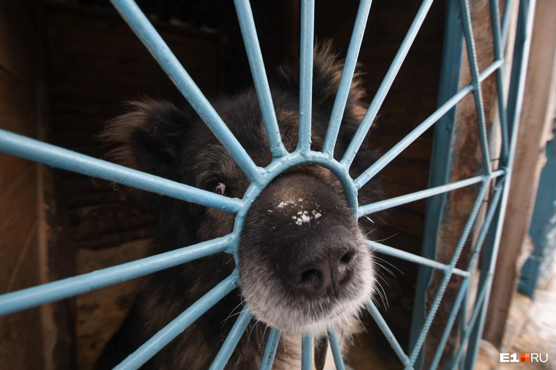 Тот самый Марк, напугавший людей на Новомосковском рынке