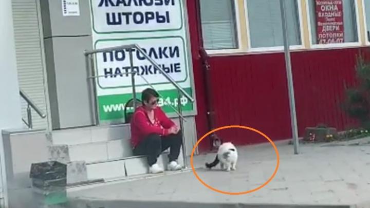 «Пакет с кошки сними!»: волгоградцы сняли на видео издевательства посреди улицы над котом
