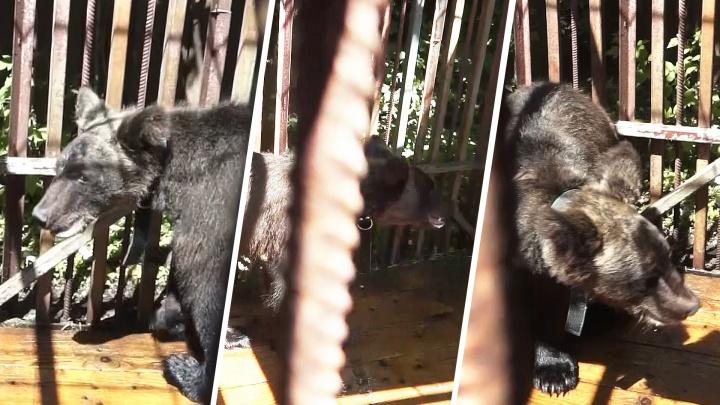 Запертого в доме истощенного медвежонка спасли в Ростовской области
