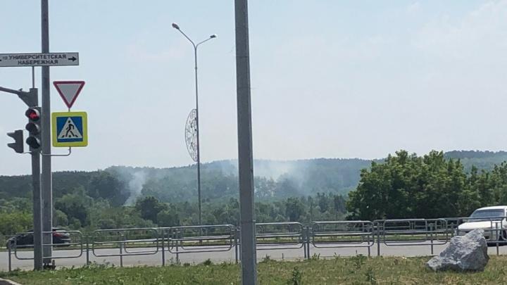 В челябинском городском бору загорелся тополиный пух