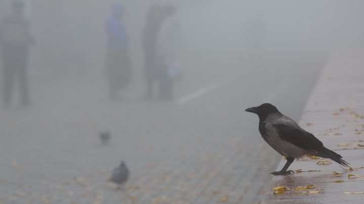 Волгоград начнет новую неделю с туманов, похолодания и возмущений: прогноз погоды