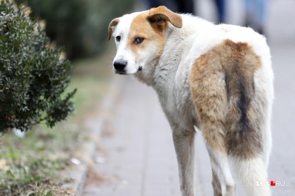 Ветеринар вкалывал собакам препарат, не предназначенный для эвтаназии