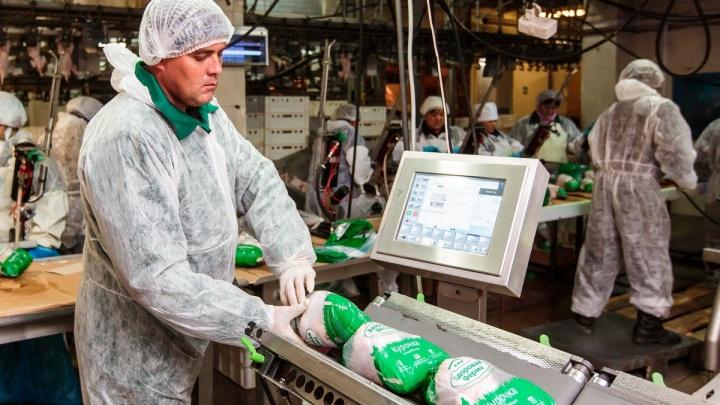 Приставы заблокировали работу птицефабрики «Уралбройлер» под Челябинском