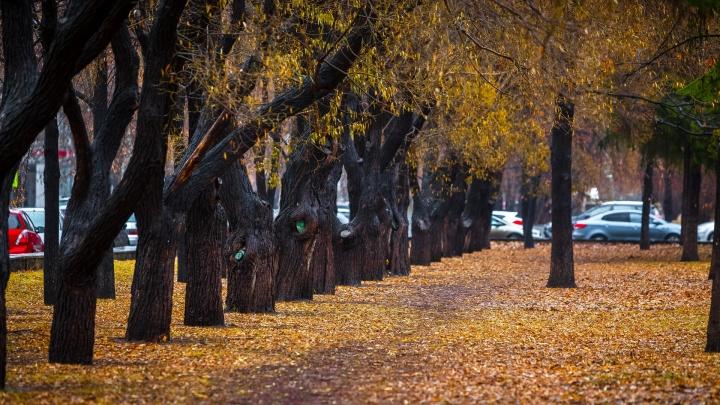Власти Челябинска отказались от озеленения города за 200 миллионов рублей
