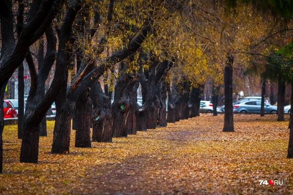 В Челябинске собирались уничтожить неприглядные, но ещё здоровые деревья