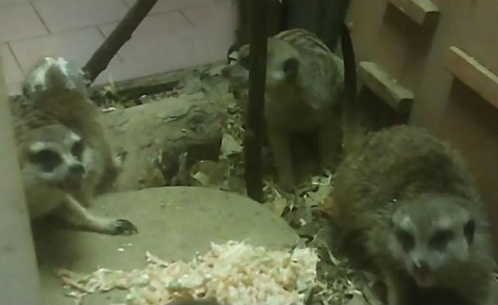 Смутило ведущих и то, что еду кидали прямо на животных, а не раскладывали по мискам