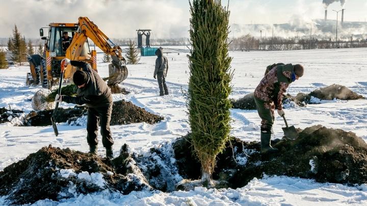 В Магнитогорске выполнили программу по озеленению города в 2019 году