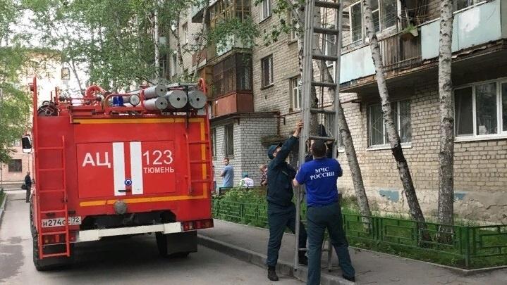 На Белинского спасатели достали кота с дерева с помощью автолестницы