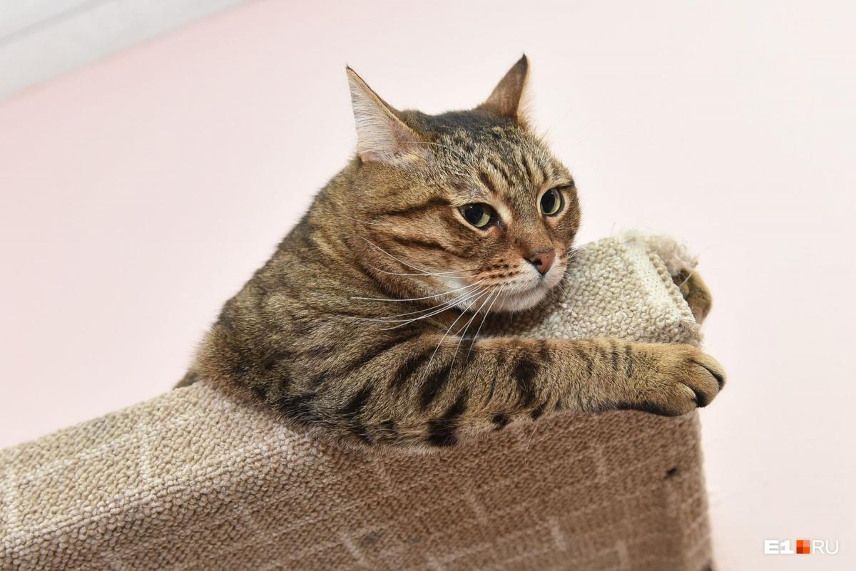 Чем больше кот играет, тем дольше он остается здоровым