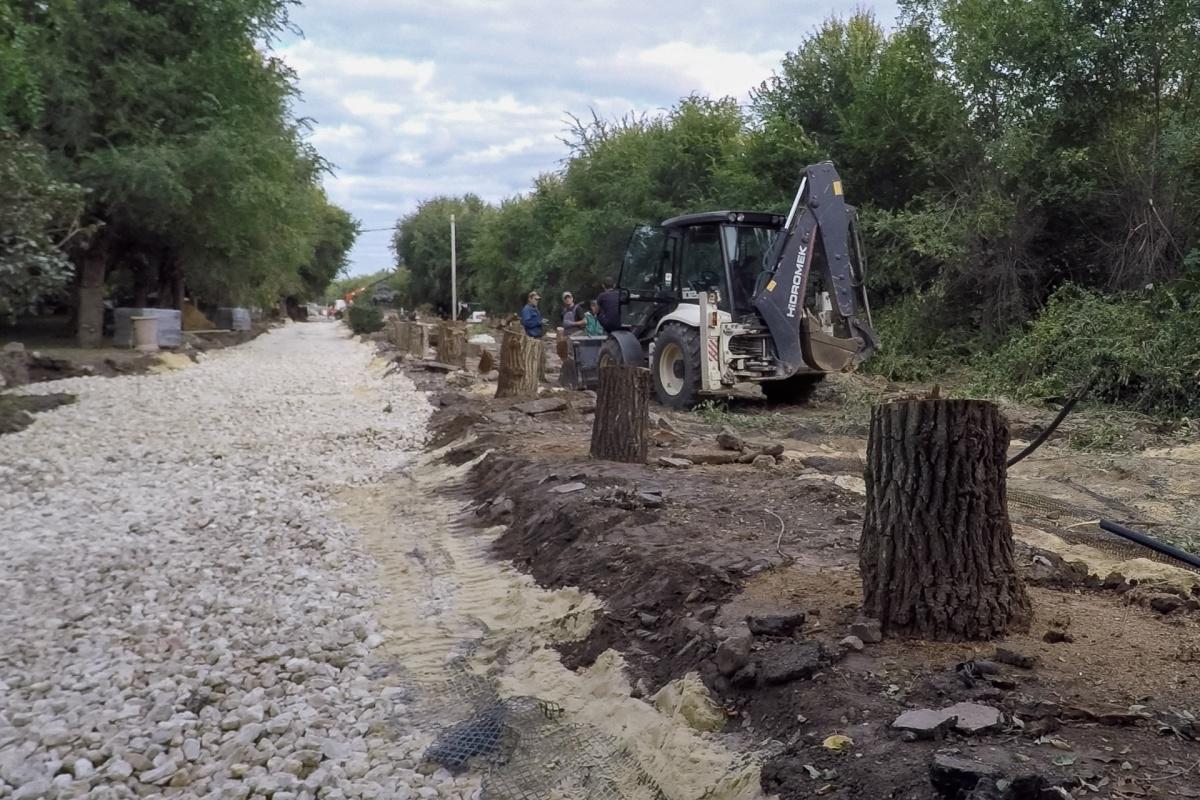 С аллеи на центральной набережной исчезнут 139 деревьев