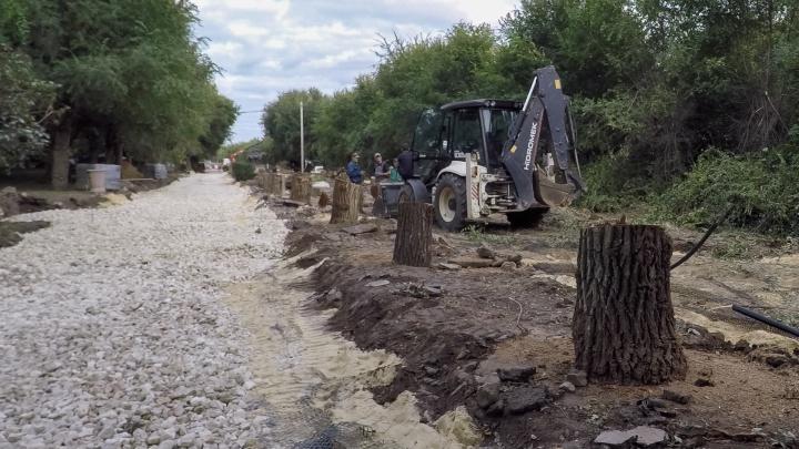 «В них нет никакой ценности»: на центральной набережной Волгограда вырубают сотни деревьев