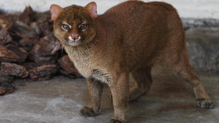В Екатеринбургском зоопарке к 8 Марта выбрали самую красивую самку