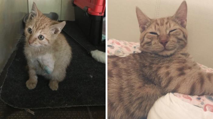 Рыжику ампутировали лапку, посмотрите, в какого красавца он превратился за пять месяцев