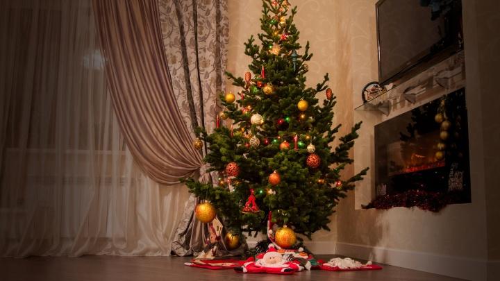 В Новосибирске начали доставлять елки бесплатно