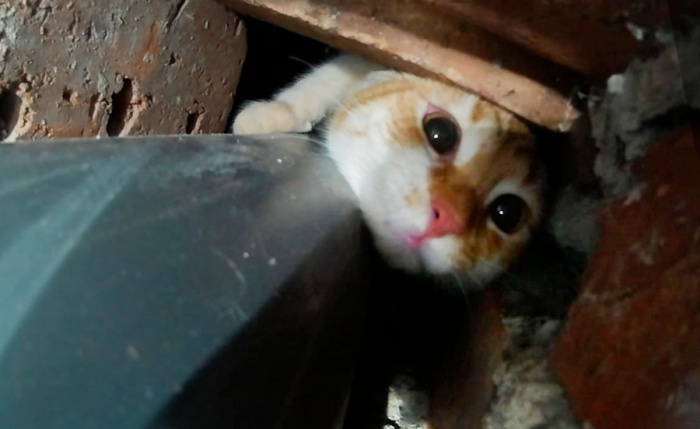 Так кот может застрять в вентиляционном канале