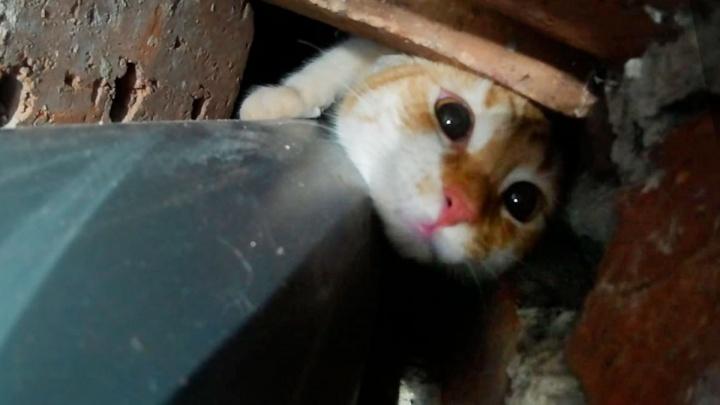Инструкция E1.RU: какие смертельные опасности подстерегают вашего кота в квартире