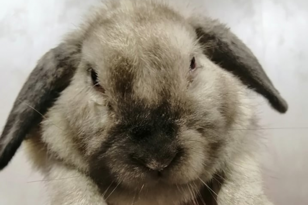 Крольчихе ищут новый дом